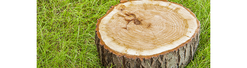Stump Removal | Affordable Stump Grinding | Tallahassee, FL | (850) 997-2181